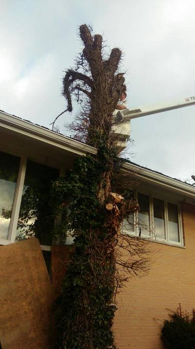 nuisance tree removal
