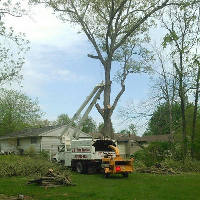 crane services tree trimming